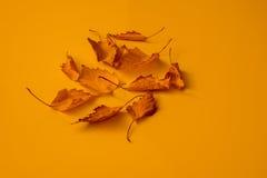 Fogli arancioni Immagine Stock Libera da Diritti
