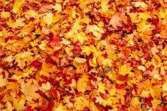 Fogli arancioni e rossi di caduta di autunno su terra fotografie stock