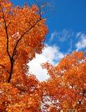 Fogli ardenti dell'arancio Fotografia Stock Libera da Diritti