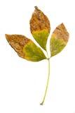 Fogli in autunno Immagine Stock