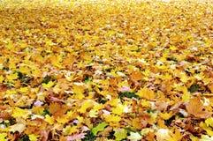 Fogli autunno \ di caduta Fotografia Stock