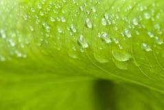 Fogli bagnati di verde in un giardino Fotografie Stock Libere da Diritti