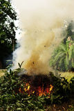 Fogli brucianti Fotografia Stock Libera da Diritti