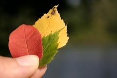 Fogli caduta/di autunno Fotografia Stock