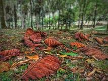 Fogli caduti Fotografia Stock