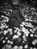 Fogli caduti Fotografie Stock Libere da Diritti