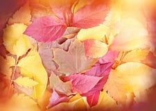 Fogli caduti autunno Fotografia Stock Libera da Diritti
