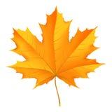 Fogli caduti autunno Immagini Stock Libere da Diritti
