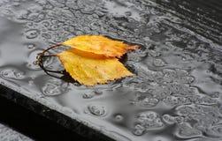 Fogli caduti nella pioggia Fotografia Stock