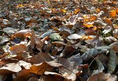 Fogli caduti sulla terra Fotografia Stock Libera da Diritti