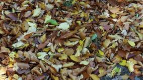 Fogli caduti sulla terra Foglie cadute autunno variopinto video d archivio