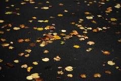 Fogli colorati in autunno Fotografia Stock Libera da Diritti