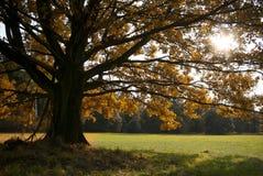 Fogli colorati della quercia sul prato di autunno Immagine Stock