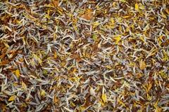 Fogli colorati di autunno come motivo della priorità bassa fotografia stock