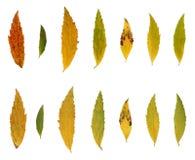 Fogli, colori di autunno fotografie stock libere da diritti