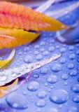 Fogli Colourful immagine stock libera da diritti