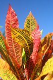 Fogli Colourful fotografia stock libera da diritti