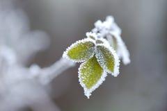 Fogli congelati Fotografia Stock Libera da Diritti