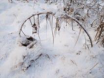 Fogli congelati di inverno fotografia stock libera da diritti