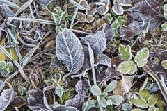 Fogli congelati dicembre sulla terra del campo Immagini Stock