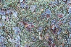 Fogli coperti di gelo, fine in su Fotografia Stock
