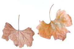 Fogli d'autunno Immagine Stock