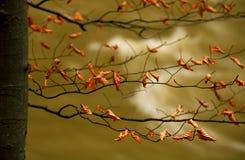 Fogli d'autunno Fotografia Stock