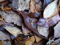 Fogli d'autunno Immagini Stock