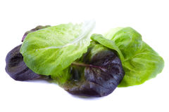 Fogli degli spinaci Immagine Stock