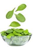 Fogli degli spinaci Immagini Stock Libere da Diritti