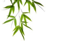 Fogli del bambù Immagine Stock