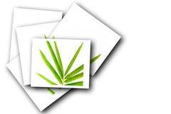Fogli del bambù Immagine Stock Libera da Diritti