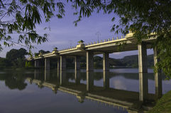 Fogli del bambù che incorniciano il ponticello del lago Fotografia Stock
