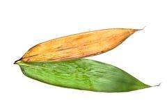 Fogli del bambù per la polpetta del riso Immagini Stock Libere da Diritti
