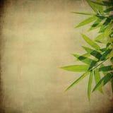 Fogli del bambù su grunge Fotografia Stock Libera da Diritti
