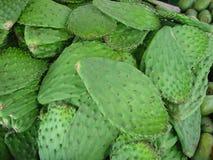 Fogli del cactus Fotografie Stock Libere da Diritti