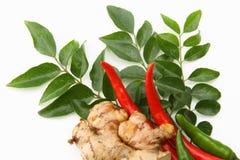 Fogli del curry, zenzero e peperoncini rossi rossi immagini stock