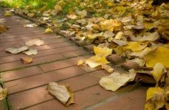 fogli del viale di autunno Fotografie Stock Libere da Diritti
