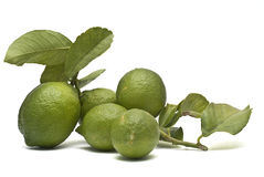 Fogli del witn dei limoni. Fotografia Stock