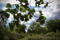 Fogli dell'albero Immagini Stock Libere da Diritti