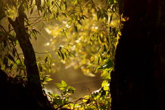 Fogli dell'albero Fotografia Stock Libera da Diritti