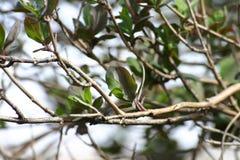 Fogli dell'albero in primavera Immagine Stock