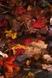 Fogli dell'autunno Immagini Stock