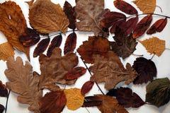 Fogli dell'autunno fotografia stock