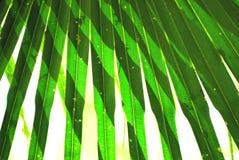 Fogli dell'indicatore luminoso del sole e della palma immagine stock libera da diritti