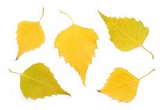 Fogli della betulla di autunno Immagine Stock
