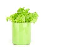 Fogli della lattuga in una tazza Immagine Stock Libera da Diritti