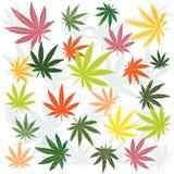 Fogli della marijuana Fotografia Stock