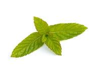 Fogli della menta verde Fotografie Stock
