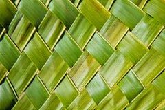 Fogli della noce di cocco Immagine Stock